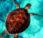 Pimientas Mías – Pimienta 18